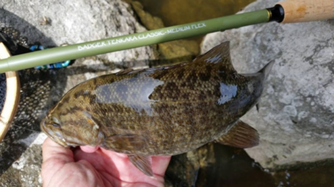 classicwithsmallmouth