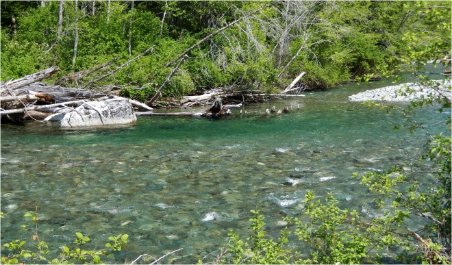 Tiny Deep Green Pools Hold Surprisingly Big Trout